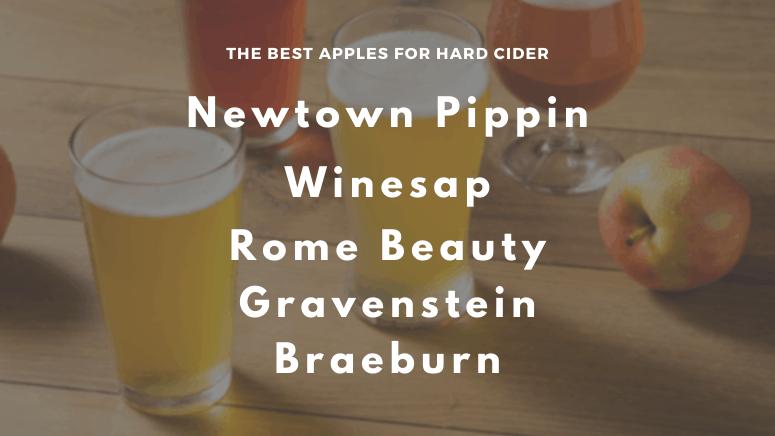 The best apples for hard cider